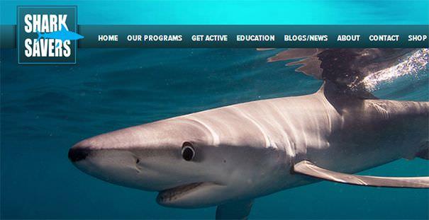 《公益》SHARK SAVERS國際鯊魚動保團體@拒絕吃魚翅‧復育鯊魚‧一起愛心公益
